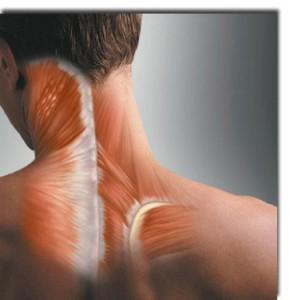 Muscle-imbalance-290x300